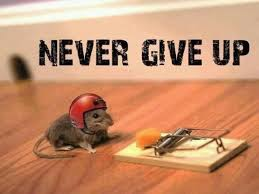nevergiveup 2013-May mouse