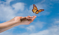 Releasing a butterfly.