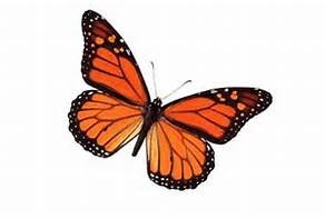The butterfly is a symbol of transformation.