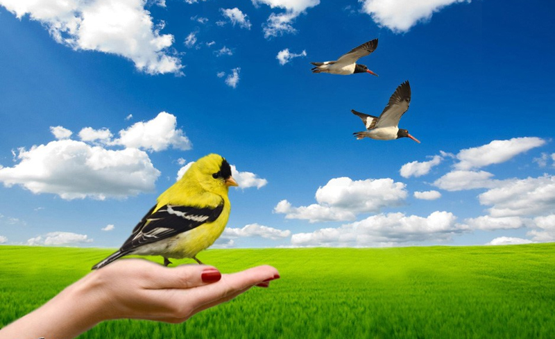 essay on a bird in hand is better than two in bush