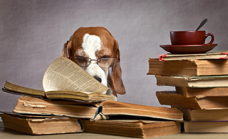sales skills. Dog reading old books