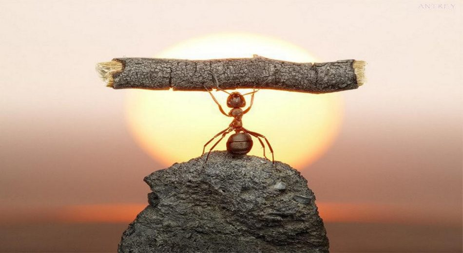 graphic of ant lifting object above his head discipline