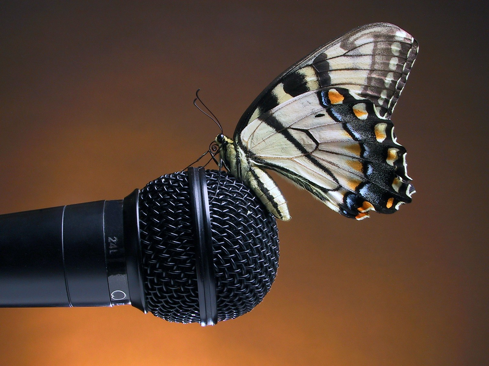 graphic of a microphone with a butterfly on it story