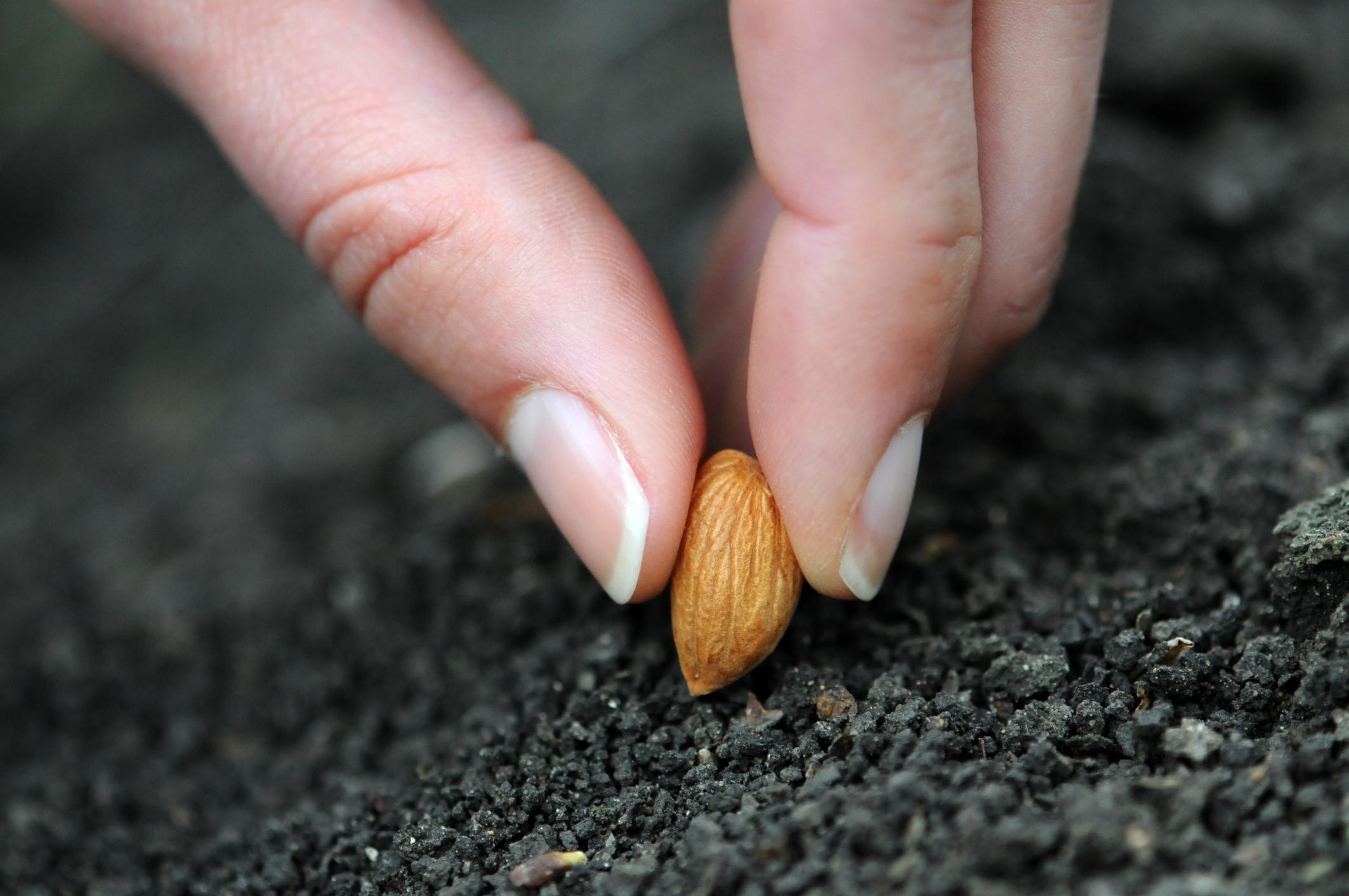 Посадка семени картинка